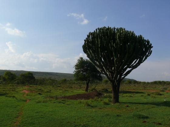 Kenia 2014 303